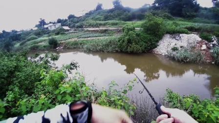 探钓带鱼海鲢