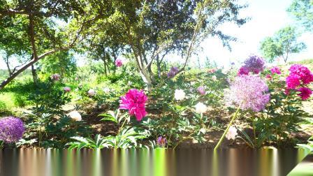 大连英歌石植物园月季正开时(2021.6.6)