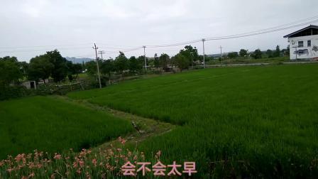 浙江温州龙湾田园风光