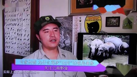 黑豹野保站 BTV生活 大象睡觉.mov