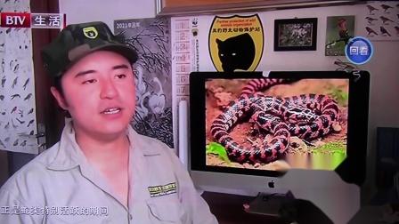 黑豹野保站 BTV生活 天热蛇多.mov
