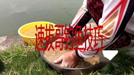 竞技钓鱼比赛前试钓掐鱼,钓鱼实战掐鱼技巧,钓鲤鱼鲫鱼