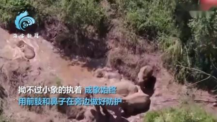 【游侠网】小象玩泥水