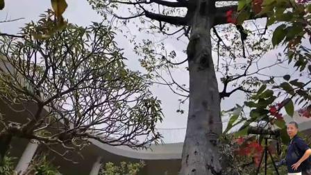 第十届中国花博会(花絮)二十三