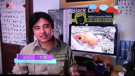 黑豹野保站 BTV生活 黄鼬.mov