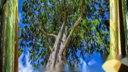 【诗朗诵】好大一棵树(2021.6)