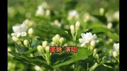 《好一朵美丽的茉莉花》,送给你和他!-- 墨脉