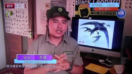 黑豹野保站 BTV生活 北京雨燕.mov