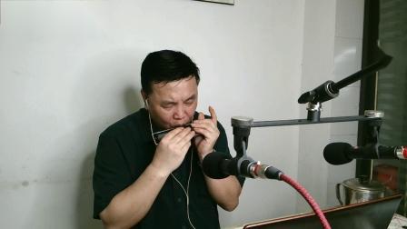 《需要人陪》(王力宏)半音阶口琴天狼星RC16