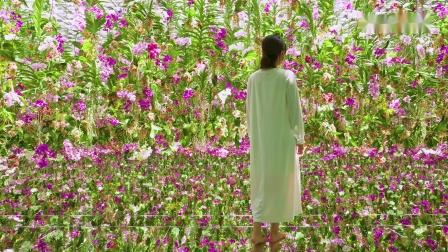 漂浮的花园──花朵与我同根同源,花园与我合为一体