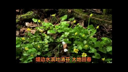 民国歌曲《大地回春》| 墨脉