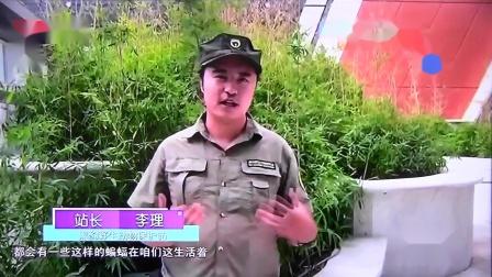 黑豹野保站 CCTV1 蛇多了.mov