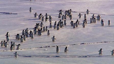 企鹅家族,精彩内容 (3)