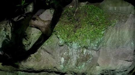 断岩枫树与圆相 / Split Rock and Enso