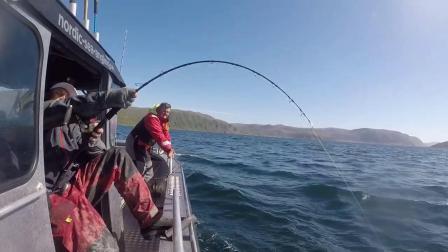 极限挑战!MAXEL鼓轮力擒长2.21米重148公斤的巨型比目鱼
