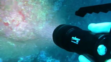 水中的鱼,虾,犹如海中舞者,以水中生物,岩石为舞台,翩翩起舞