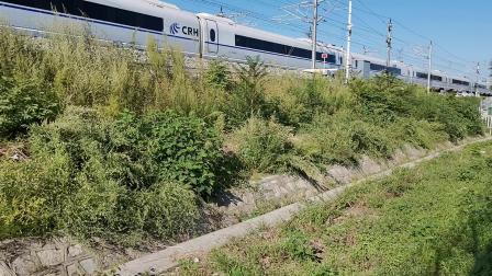 20210911 161925 徐兰(郑西)高铁G1835次列车进华山北站