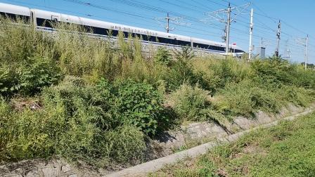 20210911 162046 徐兰(郑西)高铁G310次列车出华山北站