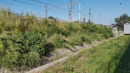 20210911 163241 徐兰(郑西)高铁G55次列车高速通过华山北站