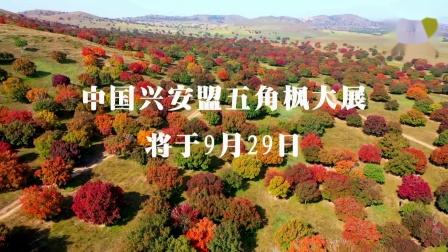 视频:中国兴安盟五角枫摄影大展将于9月29日启幕