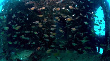 蜈支洲岛的海洋牧场:中国蓝色生态文明试验场