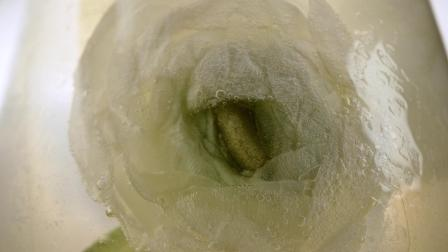 MONIN 栀子花风味糖浆