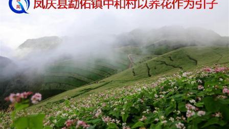 凤庆县勐佑镇中和村以荞花作为引子(清风视频)