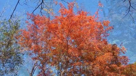 美哉 金秋十月赏蛟河红叶