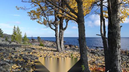 野外露营 九月的海鸟与秋天的色彩