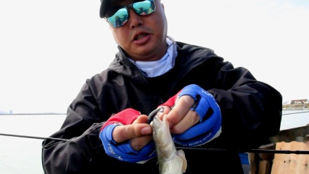路亚海蜇圈里的海鲶鱼
