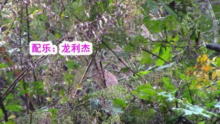 水田河镇排塘村风景  歌曲:敢问路在何方