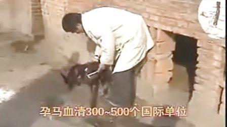 肉狗养殖视频、肉狗品种、肉狗市场价格、肉狗配种繁殖技术