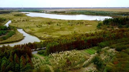 崇明东滩湿地公园