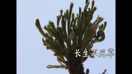 罗浮山的宝贝(草药)