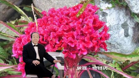 电子琴纯伴奏《岩缝里盛开的花》(杨白虎演奏)bB调