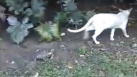 勇敢乌龟追咬小猫咪