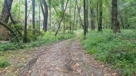 COTUO/驰图 稳定器户外森林徒步拍摄效果