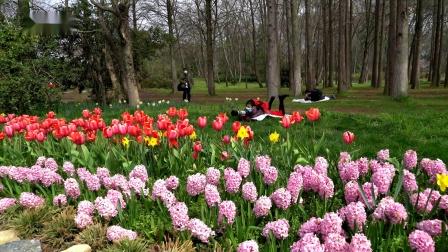 《郁金香-春天的花季》南京中山植物园采风