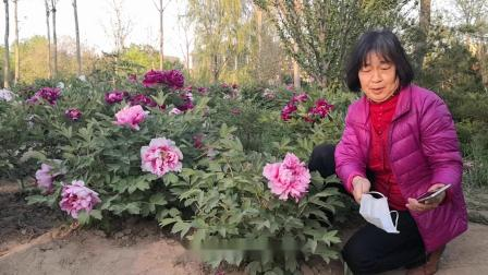 《国花盛开的地方》演唱:陈祥云