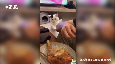 猫咪也是小吃货!发现吃的,撒娇、自己动手