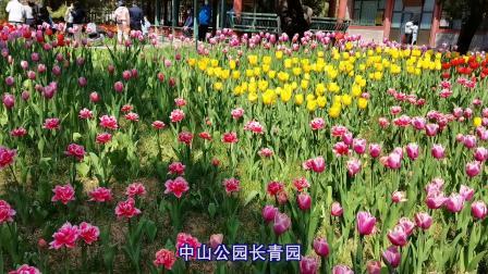 2021北京中山公园郁金香绽放