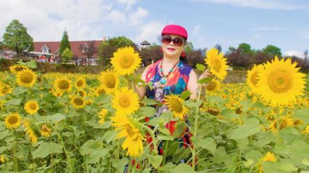 苏格兰牧场《盛开的向日葵》