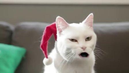 圣诞猫 哈哈哈