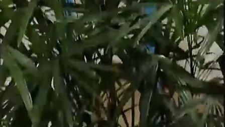 古筝的演奏方法