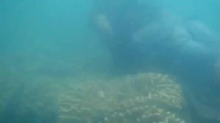 在海底打猎 Pari pari