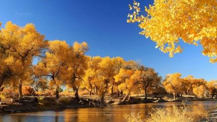 美丽的胡杨树(沙漠英雄树)背景音乐《圣山》演奏 朝克吉勒图