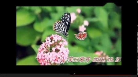 2016.10葫芦丝独奏《《蝴蝶飞飞》演奏笑口常开