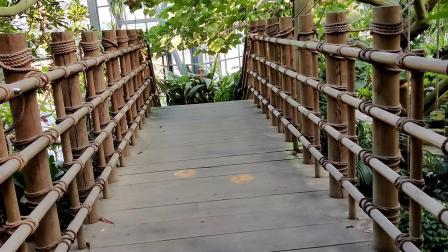 (广州悠闲篇)华南植物园【适合旅游或者散心】