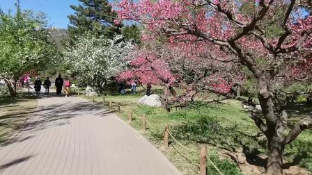 2021北京植物园春满桃园