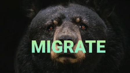 Migrate DLX Coin by Michael Rubinstein
